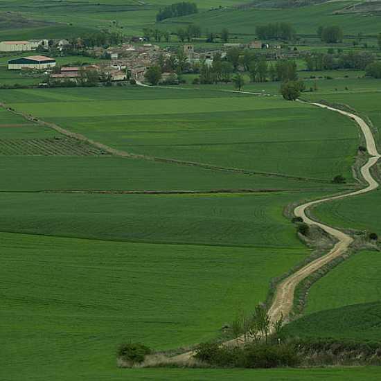 Dia 7. Atapuerca - Hornillos del Camino (40 Km)